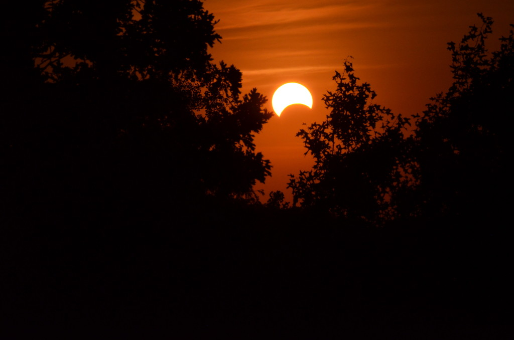 Partial_Annular_Solar_Eclipse,_May_20,_2012_-_Naperville,_Illinois